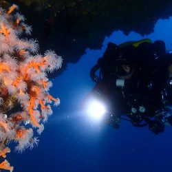 inmersiones-guiadas-rebreather-Liquid-Planet-Web